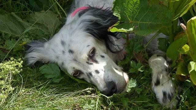sostanze velenose cane