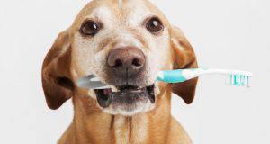 Igiene orale cane