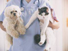 reddito di cittadinanza e spese veterinarie