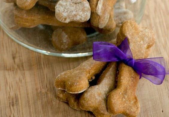 ricette cani