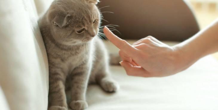 sgridare il gatto