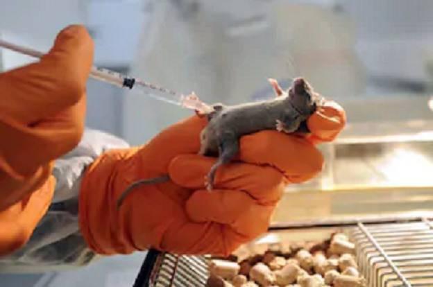 sperimentazione animali