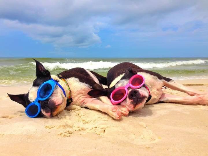 cani in spiaggia legge