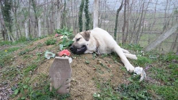 cane fedeltà