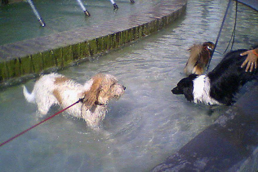 divieto bagno cani