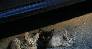 cattura gatti