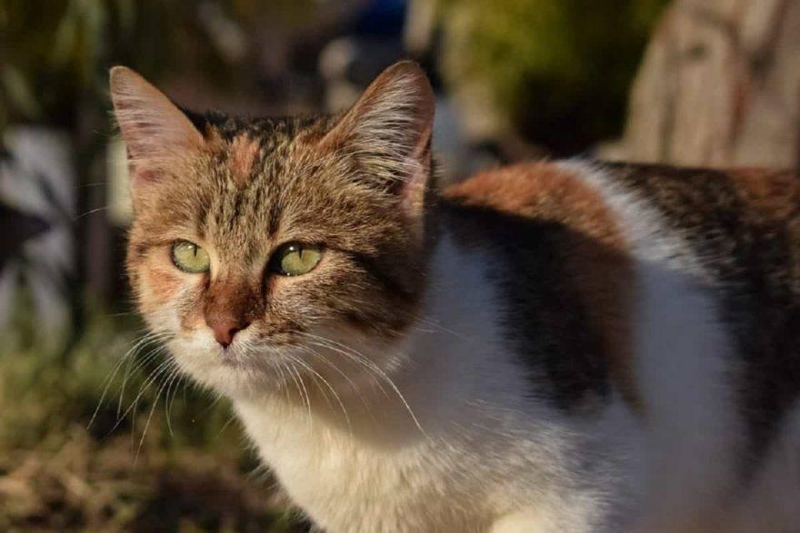 mimì gattina