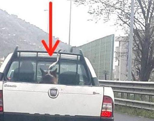 salerno cane legato