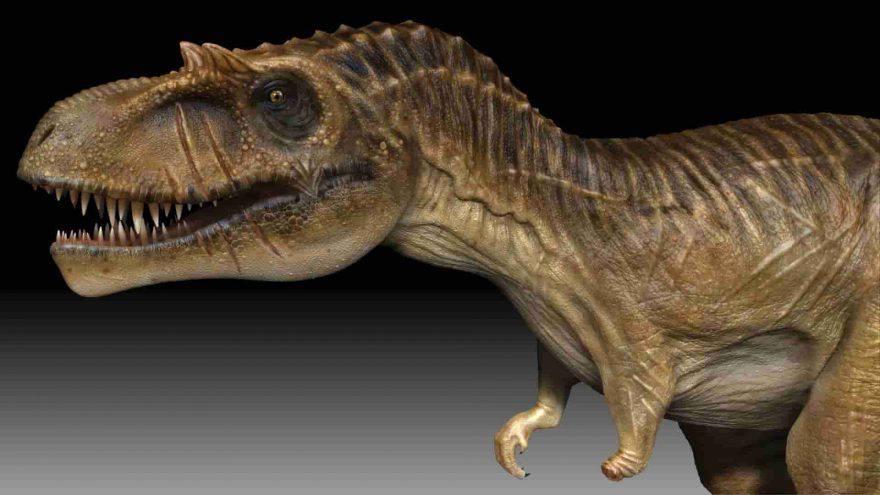 albertosauro dinosauri