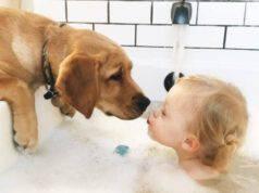 cane bagno bimbo bambino