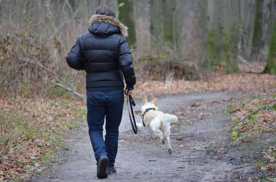 cane libero senza guinzaglio