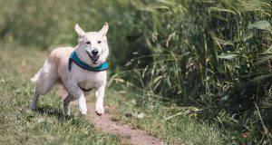cane senza guinzaglio come fare