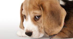 cane annoiato: 6 segnali