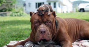 Cagna con i suoi cuccioli