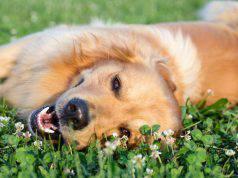 Cane in primavera