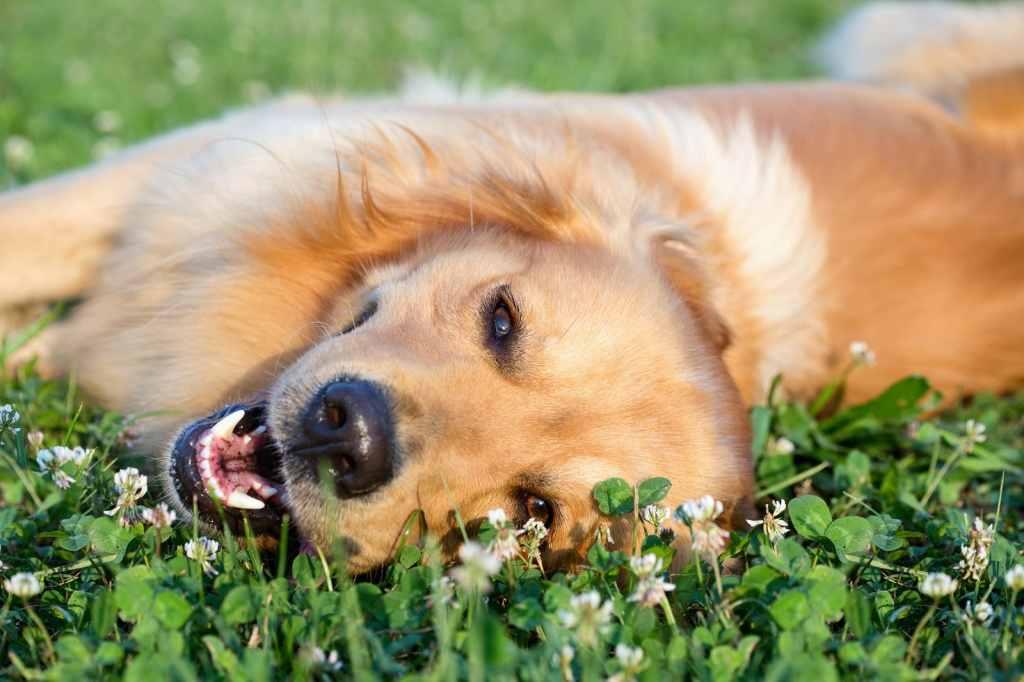 rimedi floreali cane