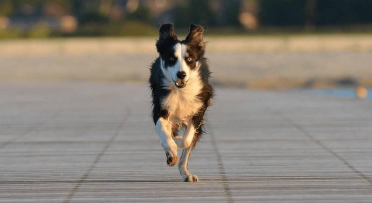 razze cani che non scappano
