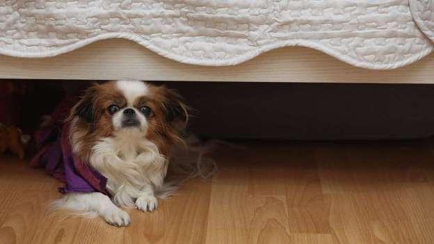 cane nascosto sotto al letto