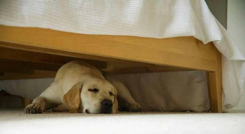 perchè il cane dorme sotto al letto