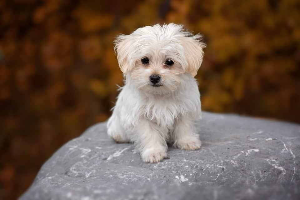 Nomi per cani toy