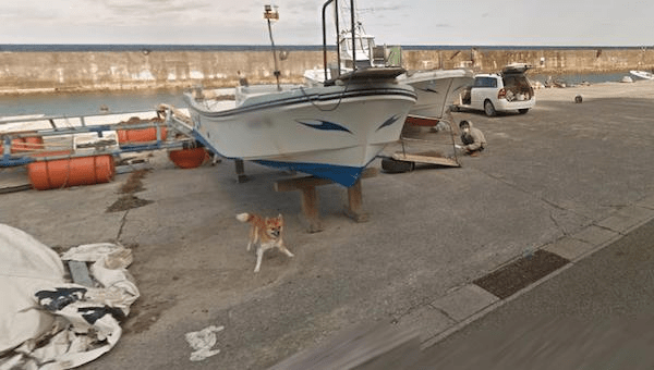 animali google street view