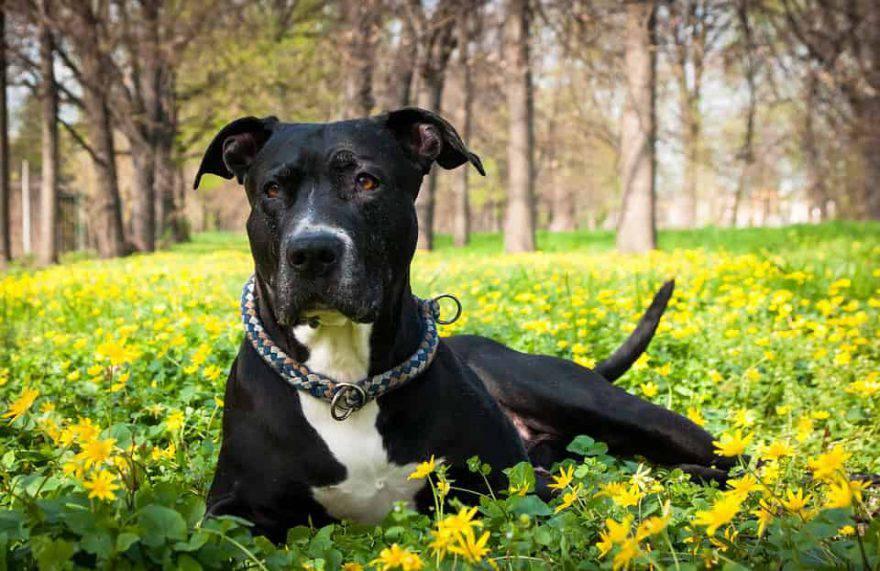 cane primavera consigli