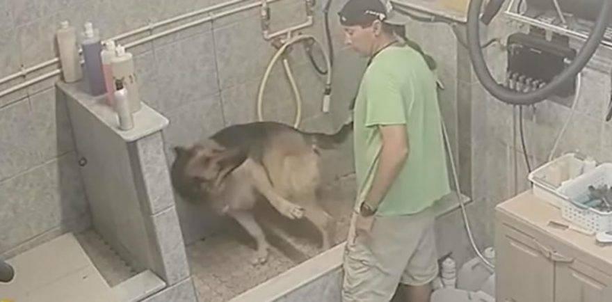 maltrattamento cani toeletta