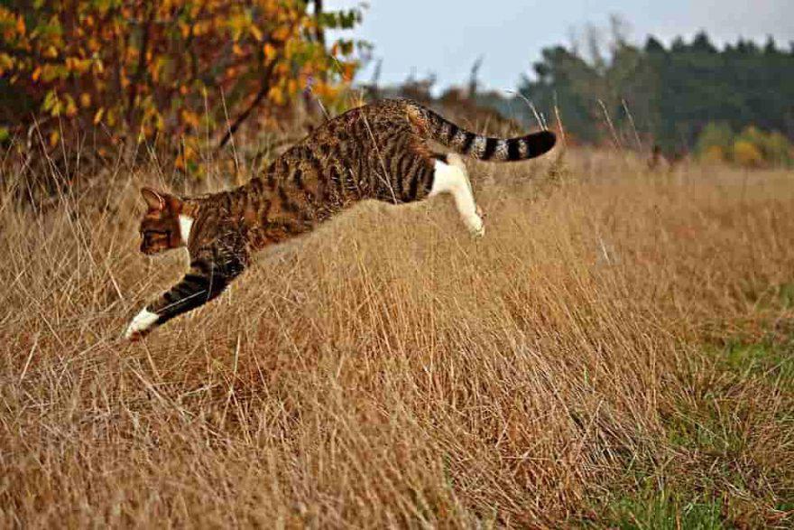 andare a correre con il gatto