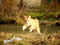 gatto corsa