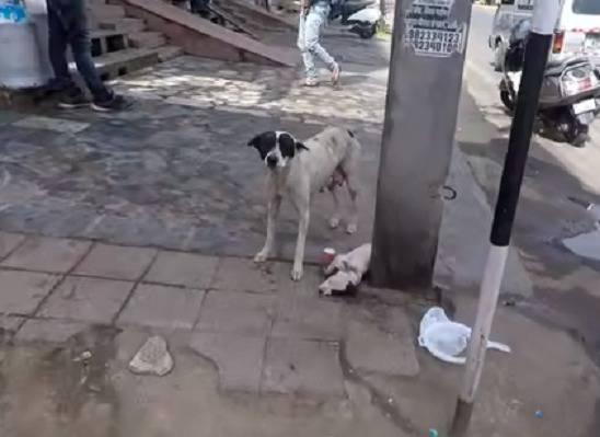 maternità cani
