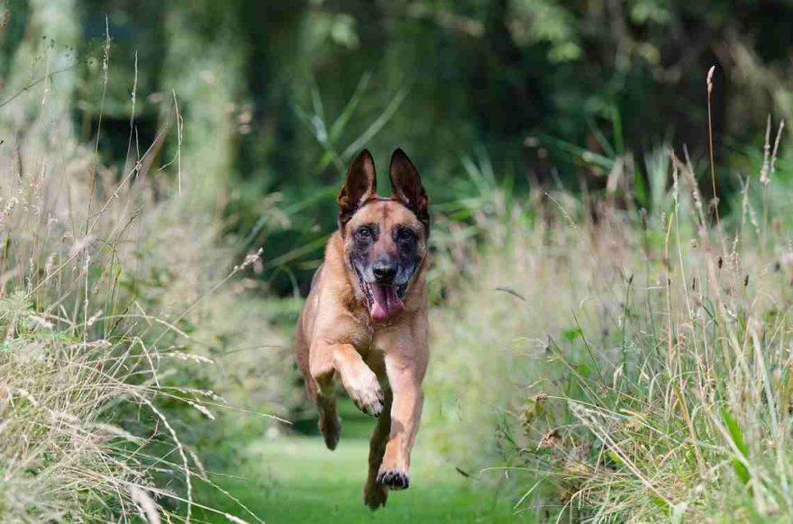pericoli primavera cane