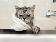 paura dell'acqua nel gatto