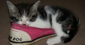 Gatto annusa scarpe del padrone
