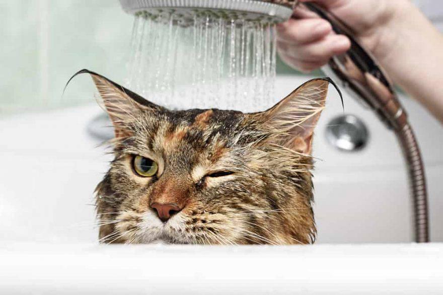 paura acqua gatto