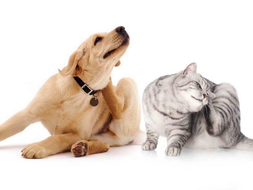 Gatto cane con parassiti