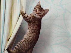 Gatto in casa: vantaggi