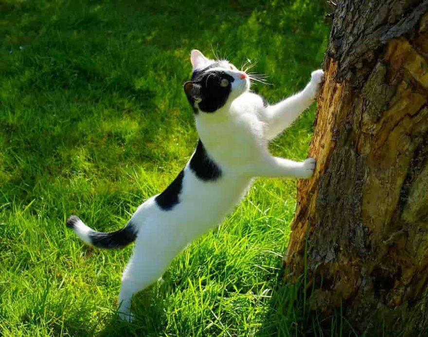 gatto primavera esterno