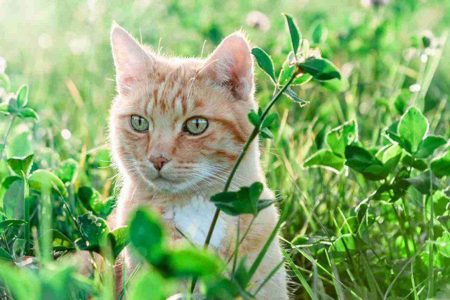 gatto in primavera