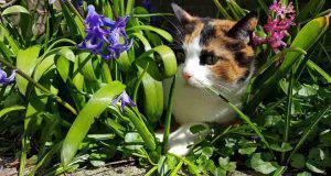 cura del gatto in primavera