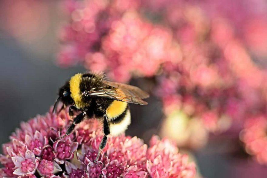 insetti primavera