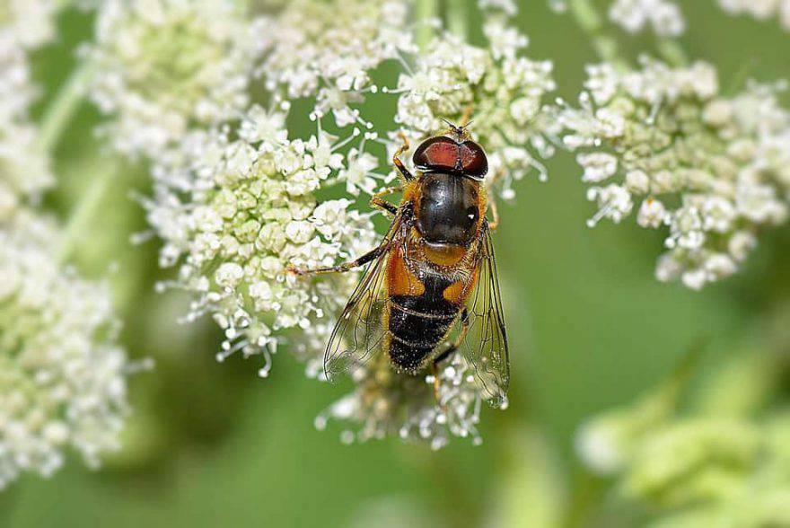 primavera insetti