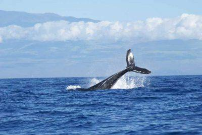 strage di balene in islanda