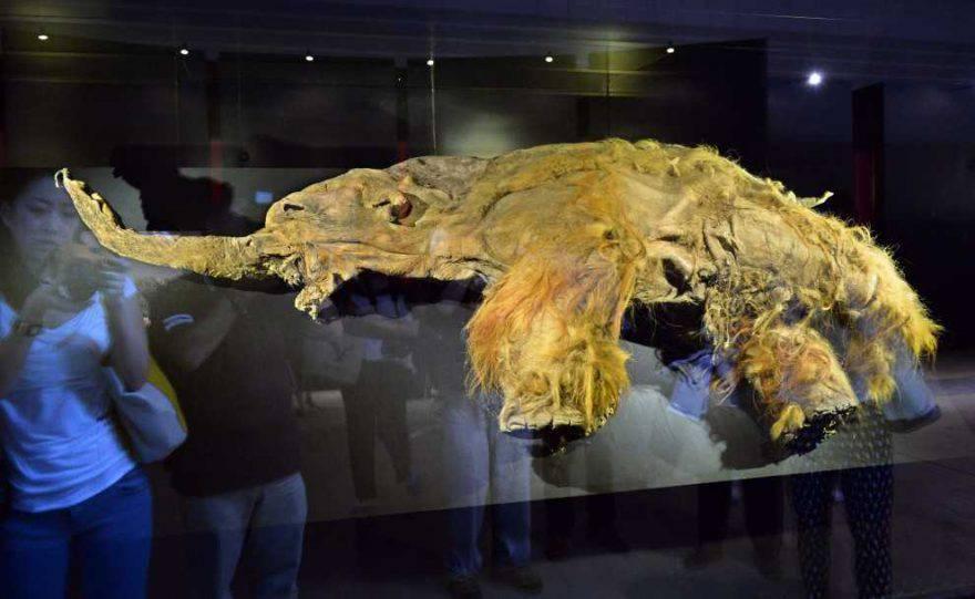 clonazione mammut