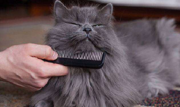 rimuovere peli gatto