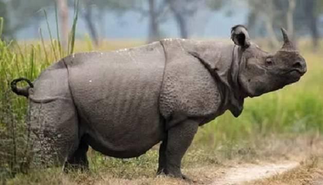 bracconieri rinoceronti