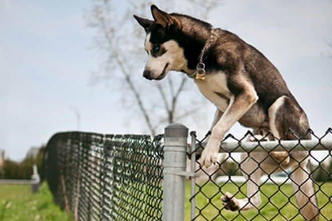 cani che scappano