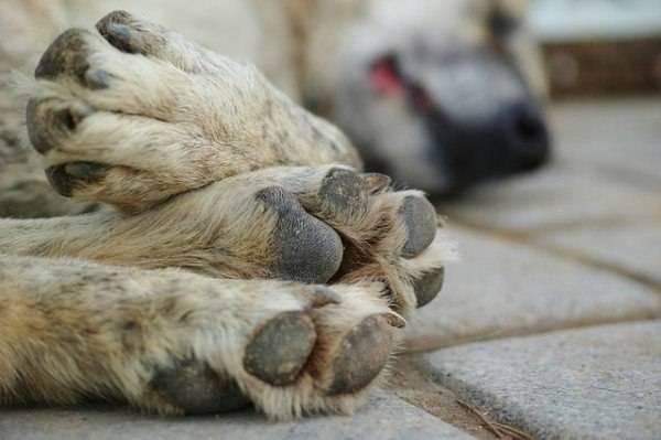 soccorso animali incidenti