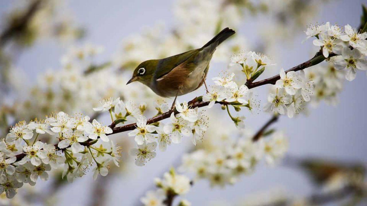 Nido Di Tortore Sul Balcone uccelli: le 5 specie più belle che puoi vedere in primavera