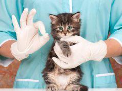vaccinazione gatti