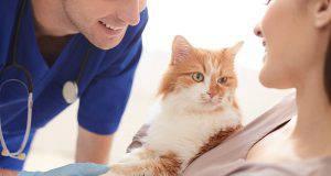 Vaccini gatti